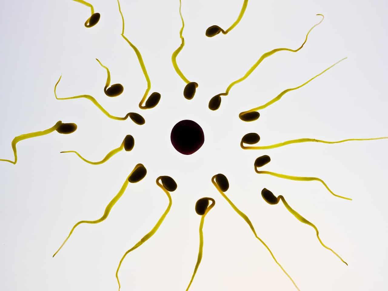 Schwanger - das Wunder vom Leben beginnt